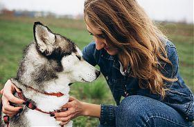 Husky-Wanderung