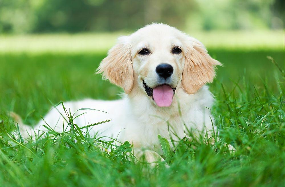 Hund Hund