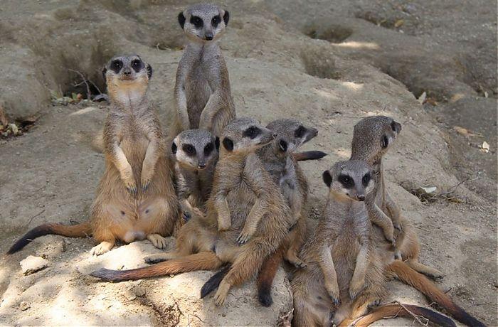 Zoo Linz At Jollydays Bewertungen Und Mehr Findest Du Hier